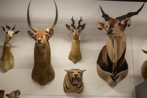 Mammalogy Collection