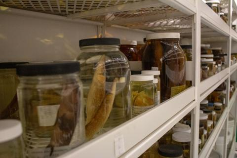 Ichthyology Collection
