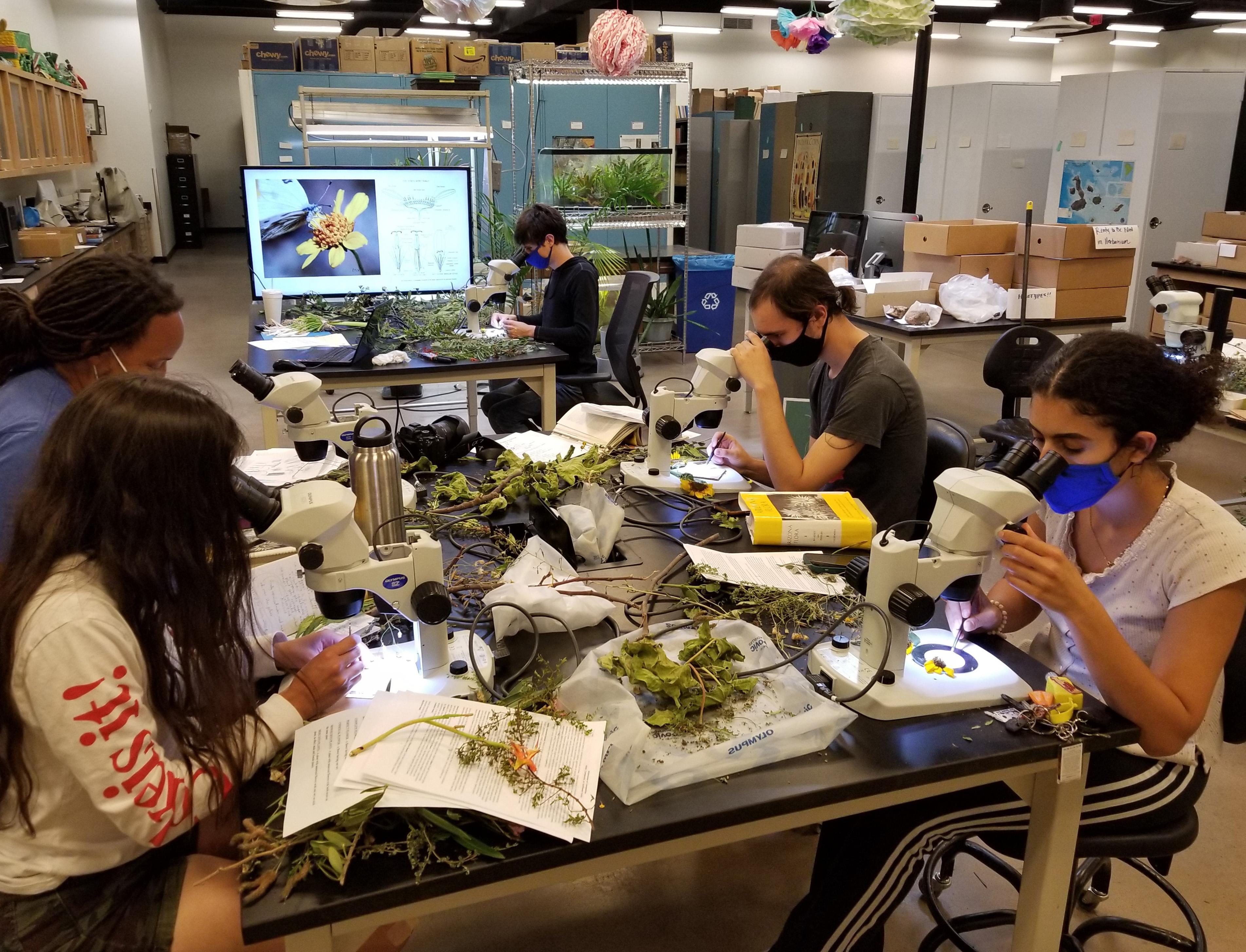 Picture: The scholars investigate specimens in the herbarium.