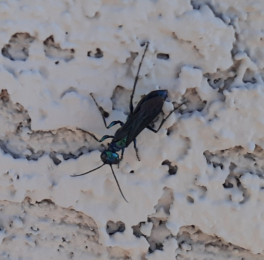 Wasp on apartment wall