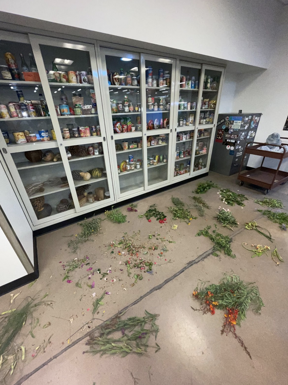 Plants collected by Liz and the JEDI scholars are spread across the herbarium floor